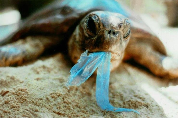 plastic debris-1