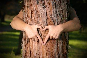 forest-stewardship.jpg